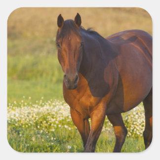 Horse in pasture near Pullman, Washington Square Sticker