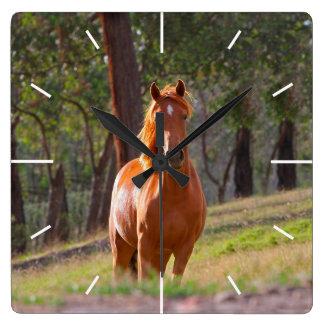 horse in pasture wallclock