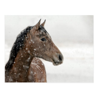 Horse in snow postcards