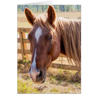 Horse in Sunlight Photograph Blank Inside Greeting Card
