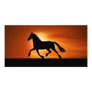 Horse In Sunset Custom Photo Card