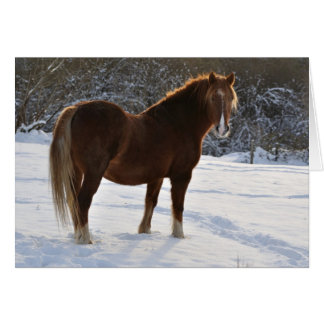 Horse in the snow Xmas card