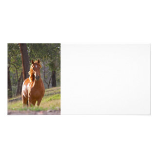 Horse In The Woods Personalized Photo Card