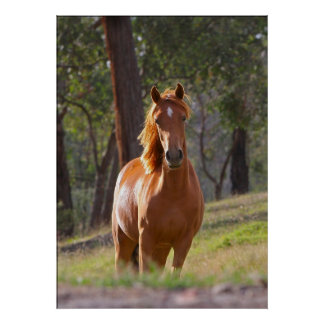 horse in the woods poster print FROM 8.99