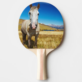 Horse in Torres del Paine National Park, Laguna
