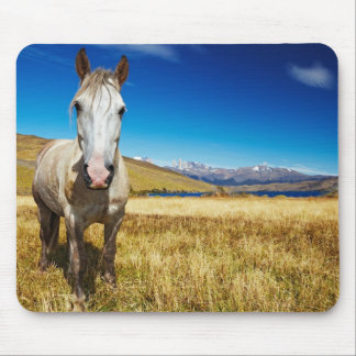 Horse in Torres del Paine National Park, Laguna Mouse Pad