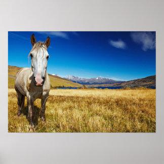 Horse in Torres del Paine National Park, Laguna Poster