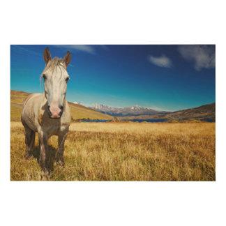 Horse in Torres del Paine National Park, Laguna Wood Canvas