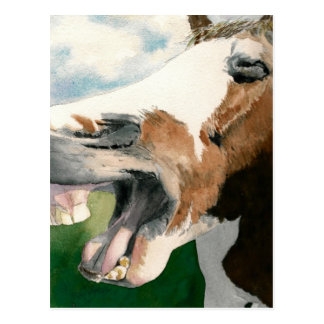 Horse Laugh Postcard