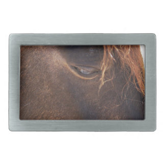 Horse looking down belt buckles