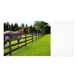 Horse looking down fence path photo card template