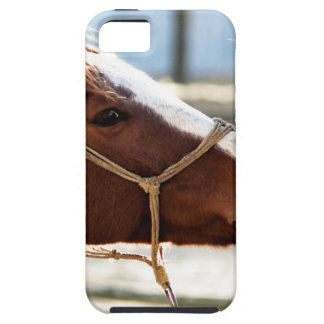 Horse Love Case For The iPhone 5