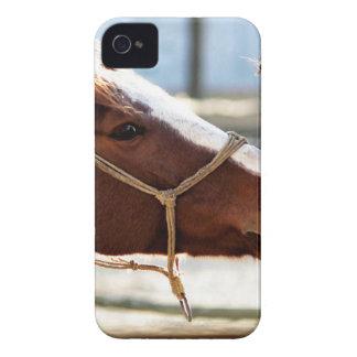 Horse Love iPhone 4 Case-Mate Cases