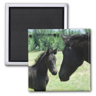 Horse love mom and baby square magnet