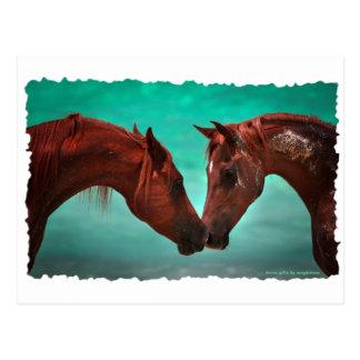 Horse Love Postcard