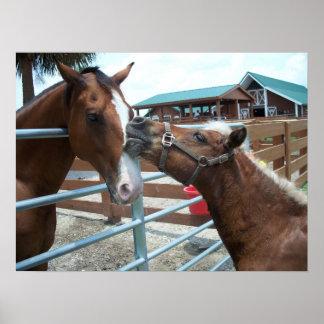 Horse Love Western Cowboy Horses Equestrian Poster
