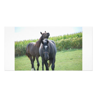 Horse Lovers Photo Card Template