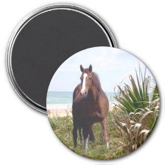 Horse Magnet Beach