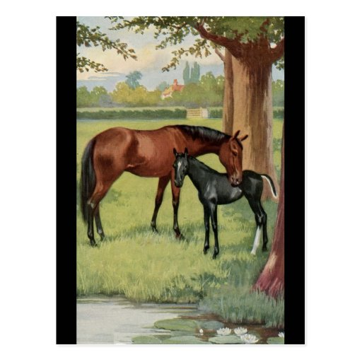 Horse Mare Foal Equestrian Vintage Image Postcards