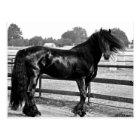 Horse modelling postcard