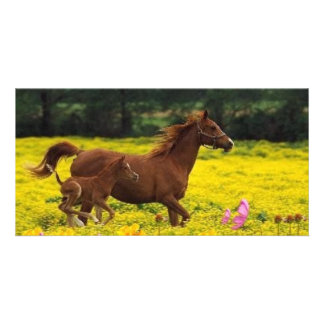 horse mom and baby photo cards