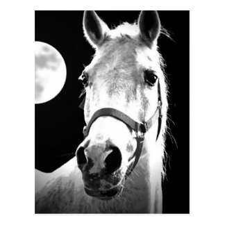 Horse & Moon Postcard