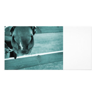 horse muzzle with hay fence blue picture card