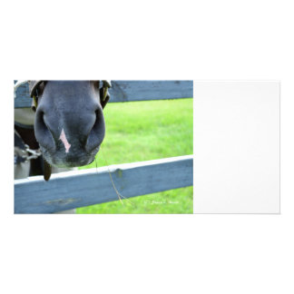 horse muzzle with hay fence photo cards