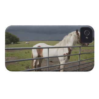 Horse near a fence iPhone 4 case