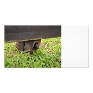 Horse nose grazing under fence photo cards