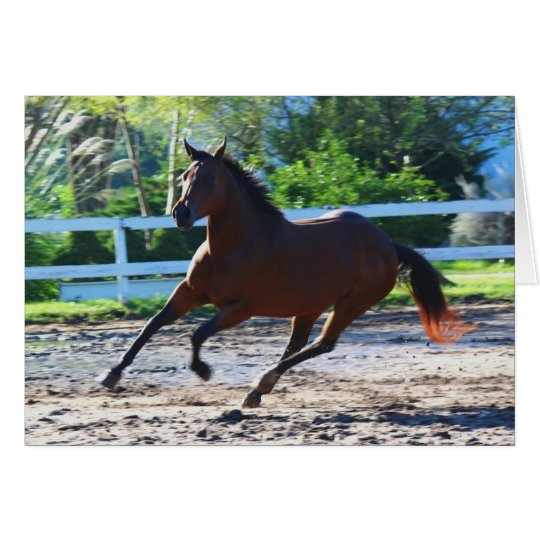 Horse note/greeting card 5