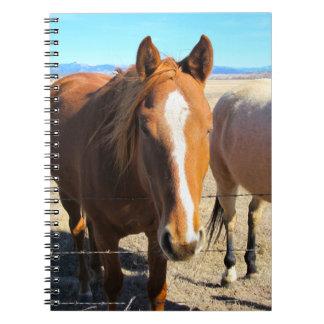 Horse Notebook