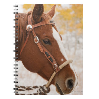 Horse Notebooks