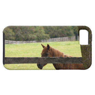Horse on a farm relaxing by a tree iPhone 5 covers