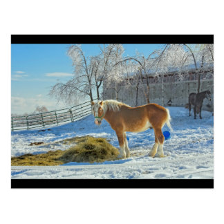 Horse On Farm After Snow And Ice Storm Postcard