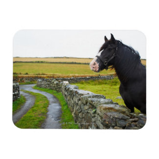 Horse on farm in rural England Rectangular Magnets