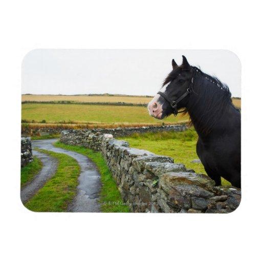 Horse on farm in rural England Rectangular Magnets