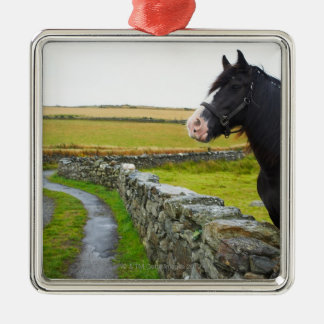 Horse on farm in rural England Silver-Colored Square Decoration