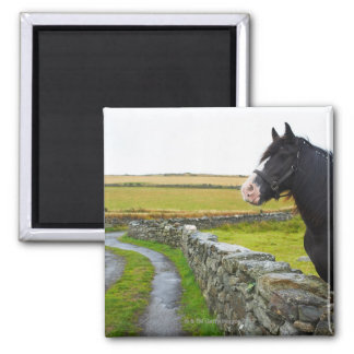 Horse on farm in rural England Square Magnet
