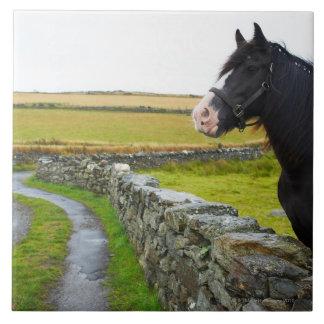 Horse on farm in rural England Tile