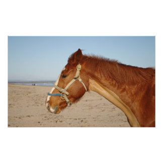Horse On West Sands Beach Photographic Print