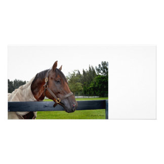 horse over fence side view customized photo card
