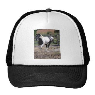Horse/Paint Pinto Trucker Hat