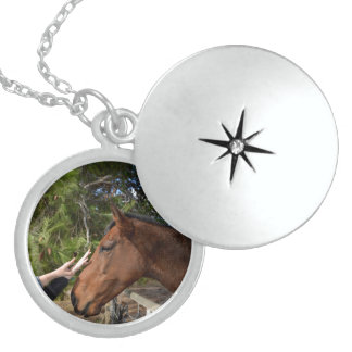 Horse_Pat,_Sterling_Silver_Locket_Necklace. Round Locket Necklace