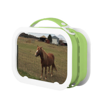 Horse Photo Lunch Box