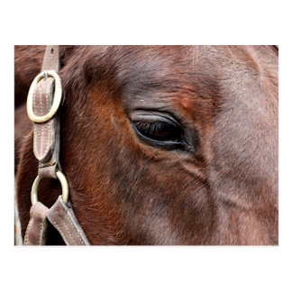 Horse photo postcard