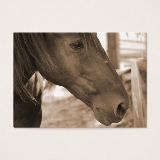 Horse Photograph Business Cards