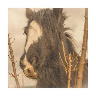 Horse photograph wood print