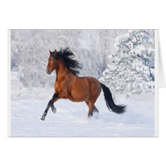 Horse Play In The Snow Card