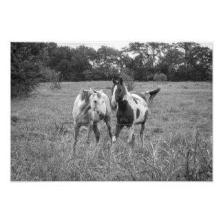Horse play photo art